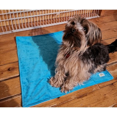 Tapis de propreté pour chien (pipi pad) - 3 formats et couleurs